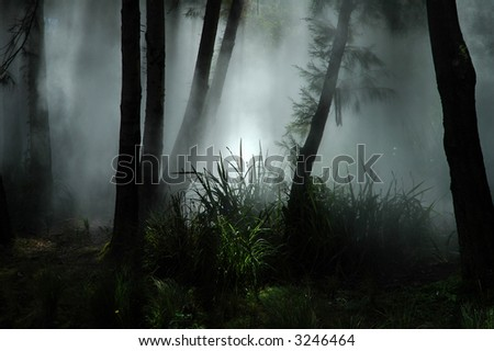 tropical forest covered with white fog - stock photo