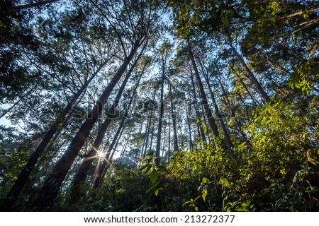 tropical forest in the morning light - stock photo
