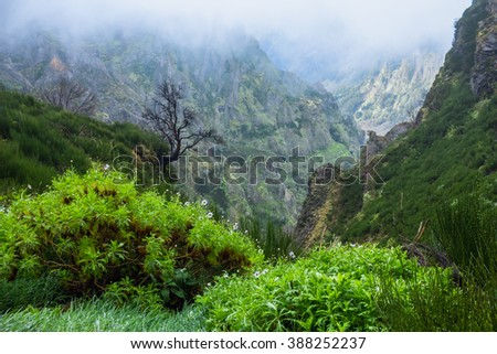 tropical forest in the mountains on Madeira island on a foggy rainy day - stock photo