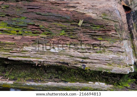 Tropical Forest Trees Texture - stock photo