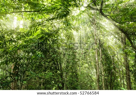 Tropical forest with ray of light - stock photo