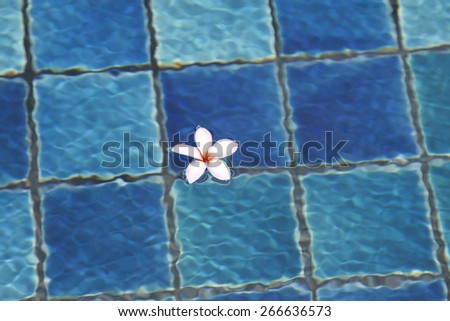 Tropical frangipani flower floating in blue water - stock photo