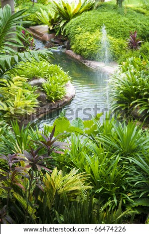 Tropical garden, pond and plants. - stock photo