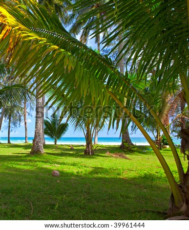 Tropical glade with palm trees near sea water - stock photo