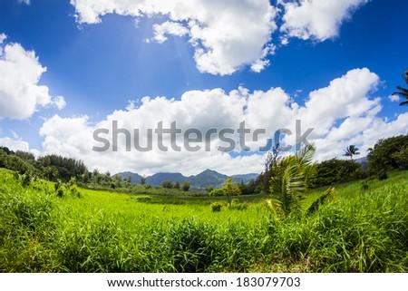 Tropical grass and mountains on a horizon - stock photo