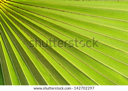 Tropical Green Leave Texture - stock photo