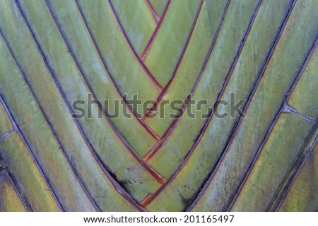 Tropical green palm tree background macro outside in summer - stock photo