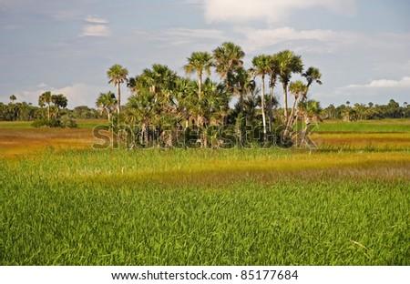 Tropical Hammock in Big Cypress National Preserve, Florida Everglades - stock photo
