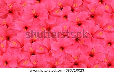Tropical hibiscus flowers pattern  - stock photo