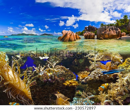 Tropical island and fishes - vacation nature background - stock photo