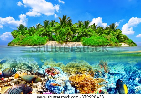 Tropical island and the underwater world in the Maldives. Thoddoo island. - stock photo