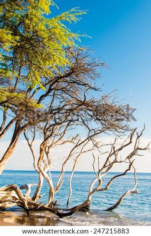 Tropical Island Paradise - stock photo