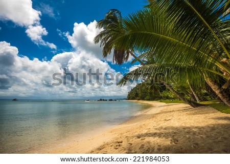 tropical island - sea, sky and palm trees - stock photo