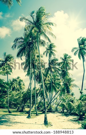 Tropical Island with palm trees - stock photo