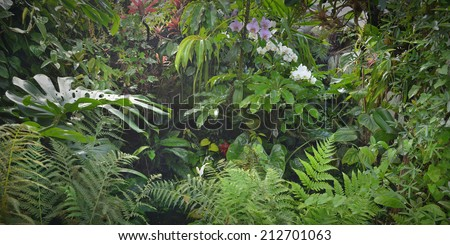 tropical jungle forest with flowers and plants - stock photo