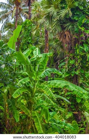 Tropical landscape.  - stock photo