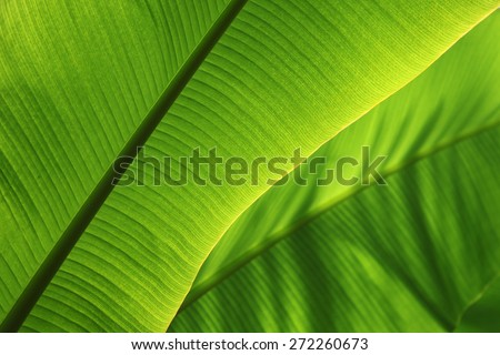Tropical Leaf - stock photo