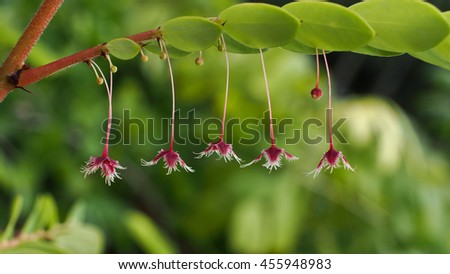 Tropical Leaf-flower in The Garden - stock photo