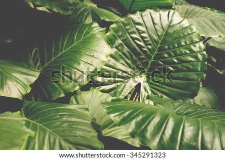 tropical leaves background, pattern - stock photo
