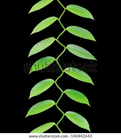 Tropical leaves growing in a pattern upwards isolated on black background - stock photo