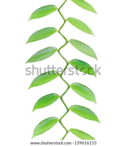 Tropical leaves growing in a pattern upwards isolated on white background - stock photo