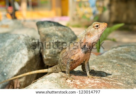 Tropical lizard on the stone - stock photo