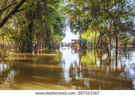 Tropical mangrove and vegetation in Cambodia - stock photo