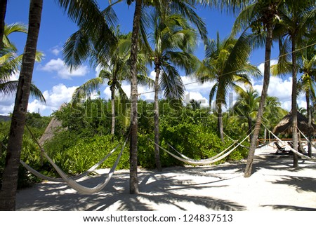 Tropical nature. Beach Paradise Hammock under palm  - stock photo