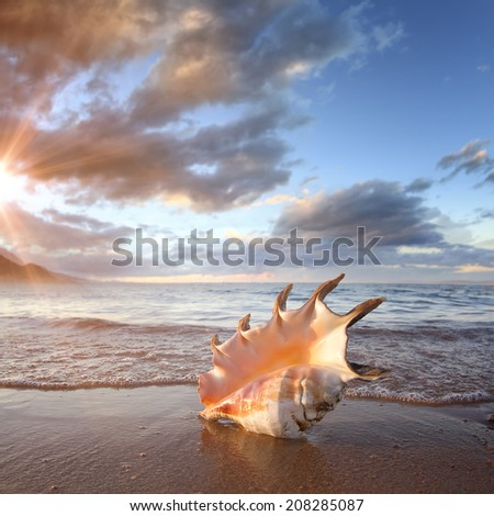 Tropical ocean paradise design postcard. A beach with seashell of giant mollusk on reflected wet sand near shorebreak waves  - stock photo