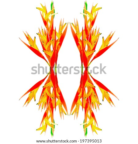 Tropical orange Heliconia flower, isolated on a white background - stock photo