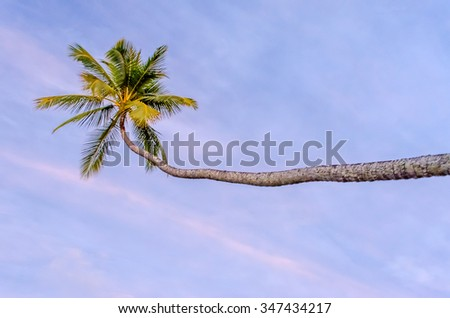 Tropical Palm against a purple sky, French Polynesia - stock photo