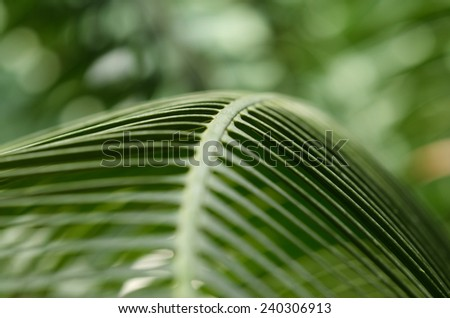 Tropical Palm Branch at Kew Garden's. London. UK - stock photo