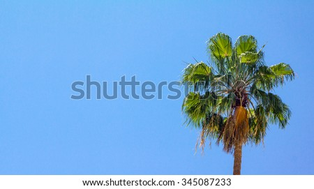 Tropical palm tree against a clear blue sky background with no clouds - stock photo