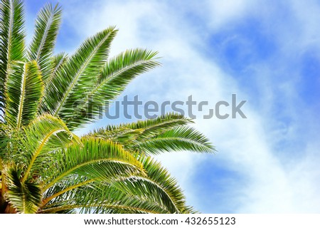 Tropical palm tree over with blue sky on background  - stock photo