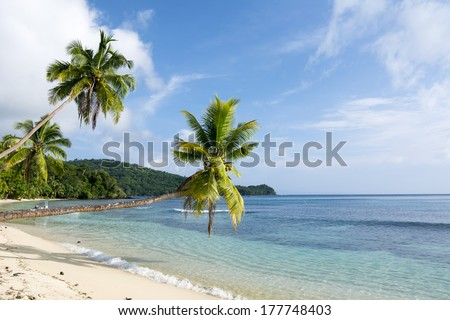 Tropical palm trees hang over an exotic, white sand beach in the south pacific. - stock photo