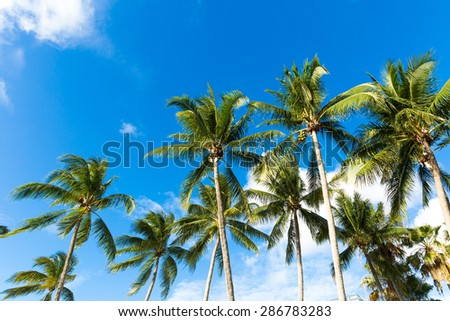 Tropical palm trees in the blue sunny sky - stock photo