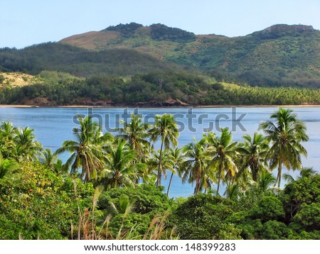 Tropical palms in Nacula island, Yasawa Islands, Fiji  - stock photo