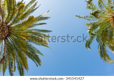 Tropical palms low angle view of fronds in breeze above against blue sky. - stock photo