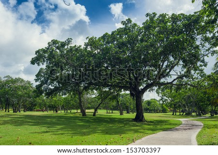 Tropical Paradise. Dominican Republic, Seychelles, Caribbean, Mauritius, Philippines, Bahamas. a green tropical forest. Pathway in tropical park - abstract travel background. - stock photo