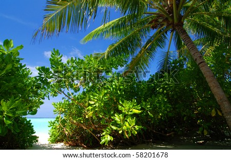 Tropical paradise in The Maldives with a coconut palm and a view at the sea - stock photo