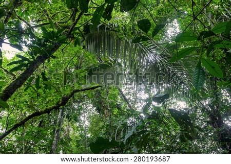 Tropical Plants, Amazonian Jungle, Cuyabeno Wildlife Reserve  - stock photo