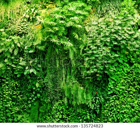 Tropical plants green background. Lush, natural foliage - stock photo