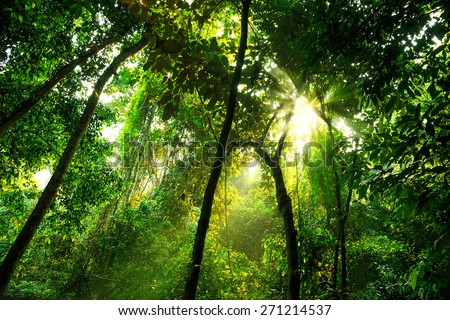 Tropical primary forest in PHONGNHA, QUANGBINH, VIETNAM - stock photo