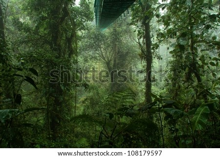 Tropical rain forest in Costa rica - stock photo