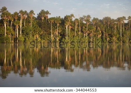 tropical rain forest, Lake Sandoval, Amazonia, Peru - stock photo