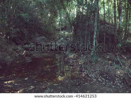 Tropical rain forest, trees, water - stock photo
