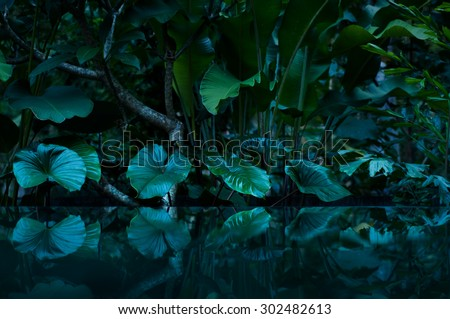 tropical rain forest with water mirror - stock photo
