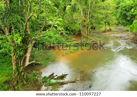 Tropical rainforest and river - stock photo