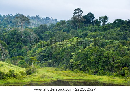 tropical rainforest,Khao Yai National Park Thailand - stock photo