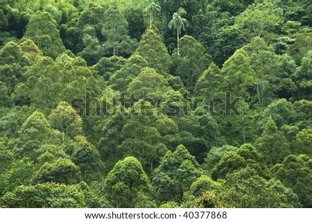 Tropical rainforest view in Malaysia. - stock photo